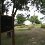 Community Garden 2012 006