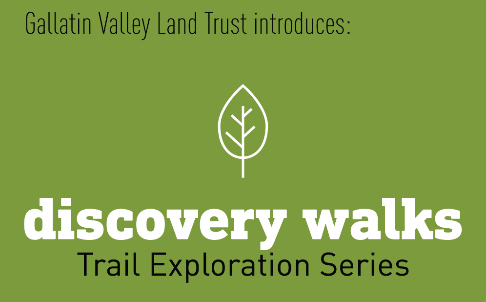 Discovery Walks Logo